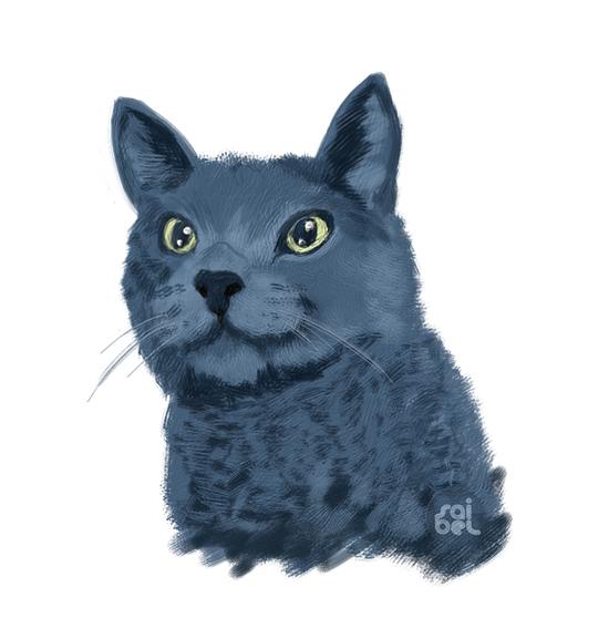 face-cat